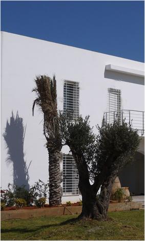 olivier palmier Art de vivre méditerranéen