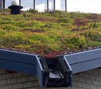 conseils-vegetalisation-toiture-small
