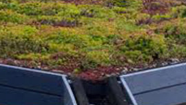 vegetalisation toiture