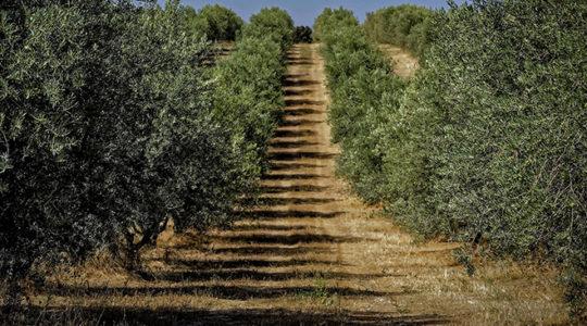 Comment travailler le bois d'olivier?