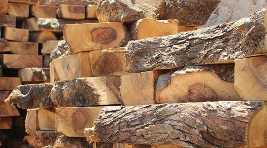Le bois d'olivier : une matière noble et résistante